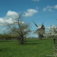 Bockwindmühle (LWL-Freilichtmuseum Detmold), Детмольд