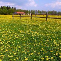Die Natur hat die schönsten Farben, Детмольд