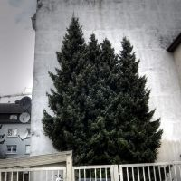 4 Grazien, Золинген