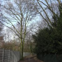 Waldweg für die Mittagspause, Крефельд