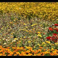 Ich liege auf einer  bunten Blumenwiese  sonnenwarm  bienenbesucht  ohne Angst  schließe ich die Augen  genieße, Леверкузен