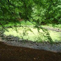 Schwerter Wald, Teich im Hochsommer, Марл