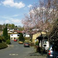 Morsbach-Frühling, Рейн