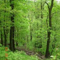 Eichen- Buchenwald mit Naturverjüngung, Рейн
