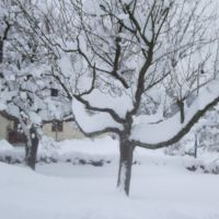 Schneemassen!, Рейн