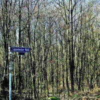Aplerbecker Wald / Forest of Aplerbeck, Стендаль