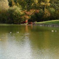 Озеро в парке, Beckum