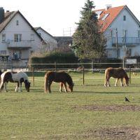 Pferde, Нидеркассель