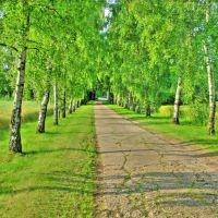 Der Weg zum Bauernhof, Ауе
