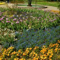 Brunnen und Blumengarten im Max-Reger-Park, Вайден