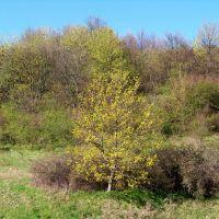 der Frühling kommt nach Sassnitz..., Засниц