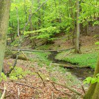 Nationalpark Jasmund im Frühling -, Засниц