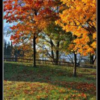 #43.  Autumn. Lingen. Ősz. Németország., Линген