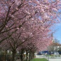 spring 2011, Мюльдорф