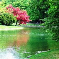 English Garden, Мюнхен