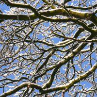 Baum mit schneebedeckten Ästen, Ольденбург
