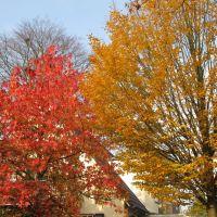 Bäume in Herbstfärbung, Ольденбург