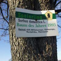 Info zum Baum des Jahres, Тетеров