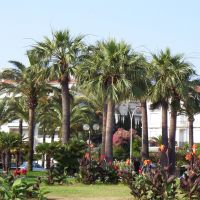 Cannes pálmafái / Palm trees of Cannes, Канны