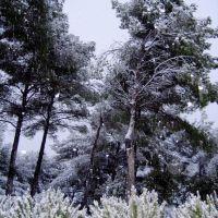 Winter in Aix, А-ен-Провенс