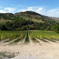 vignes de la Drome, Валенс
