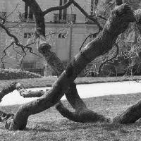 Sacrée vieille branche - Le Thabor  -  Rennes, Ренн