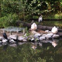 Lille, parc zoologique, Лилль