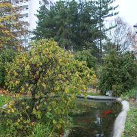Boulogne-Billancourt.le parc de mon enfance, le bassin aux poissons rouges, Асньер
