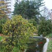 Boulogne-Billancourt.le parc de mon enfance, le bassin aux poissons rouges, Булонь-Билланкур