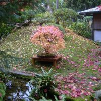 Boulogne Billancourt :  jardins  Albert Kahn, Женневилльер