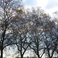 Lautomne des arbres, Макон