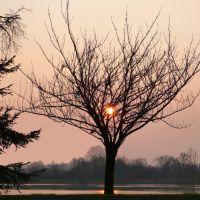Un calice pour le soleil levant, Макон