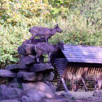 Zoo,Liberec/Tschechien, Либерец