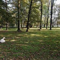 Karviná - Park Boženy Němcové - View ESE, Карвина