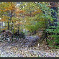 lesni cesticka na podzim by JP, Фрыдек-Мистек