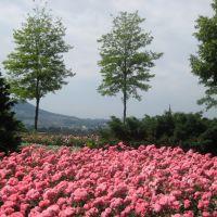 Bern - Rose Garden / Berna - Rosaleda, Берн