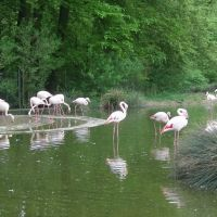 Bern / Tierpark Dählhölzli / New place for Flamingos, Кониц