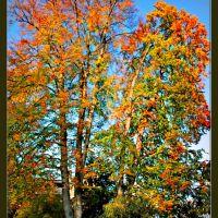 Herbst (otoño) (automne) in Winterthur, Винтертур