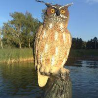 Fake Owl, Еребру