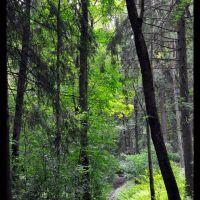 Trumslagarskogen, Malmköping, Еребру