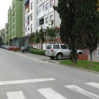 Novi Sad, ulica Kolo Srpskih Sestara, Нови-Сад