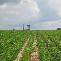 Zelena industrija - Green industry, Панцево