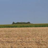 Plodna polja Bačke, Панцево