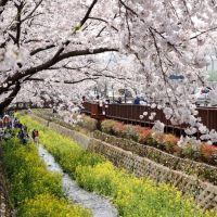 Cherry Blossom Of Yeojwachun, Чинхэ