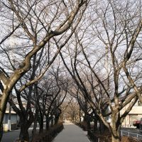 尾張広域緑道, Касугаи