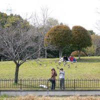 Asamiya park 朝宮公園, Касугаи