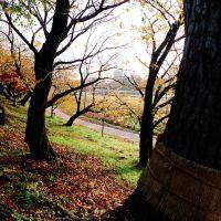 岡崎公園 Okazaki Park, Оказаки
