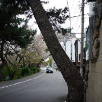 Tilted tree, Оказаки