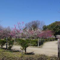 豊田市 平芝公園, Тойота