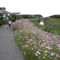 Cosmos Road, Акита